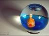 0336-aquarium