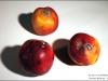 0958-nectarines